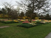 toulips在一个伟大的庭院里 库存照片