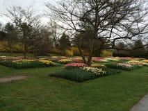toulips in einem großen Garten Stockfotos