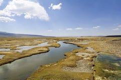 Toundra alpestre andine, Pérou Image libre de droits