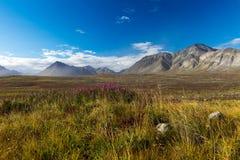 Toundra colorée de Chukotka d'automne, cercle arctique photos libres de droits