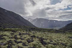 Toundra de montagne avec des mousses et des roches couvertes de lichens, Hibi Photographie stock libre de droits
