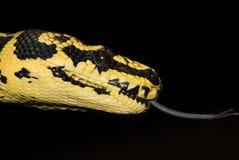 tounge węża Obrazy Stock