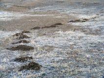 Toupeiras e imagens do solo apropriadas para o anúncio e a construção do logotipo Fotografia de Stock