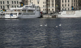 Tour boats in the harbor, Stockholm, Sweden. Royalty Free Stock Photography