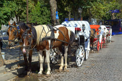 Tour carriages on street,Sozopol Bulgaria Royalty Free Stock Images
