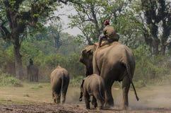 Tour d'éléphant en parc national de Chitwan image libre de droits