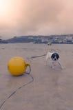 Tour d'eau dans le toulouseDog sur la plage photos libres de droits
