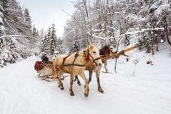 Tour d'hiver dans le traîneau de cheval image libre de droits
