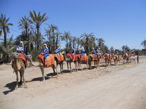 Tour de chameau image libre de droits
