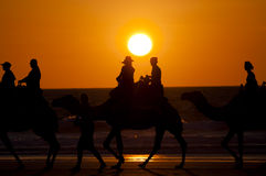 Tour de chameau de coucher du soleil - Broome - Australie Photos stock