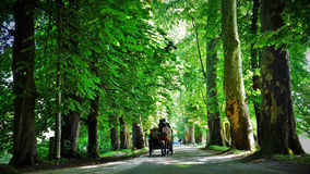 Tour de chariot par les bois Photo libre de droits