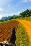Tour de cheval au Cuba Ferme de tabac de Vinales image stock