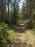 Tour de cheval dans la forêt images libres de droits