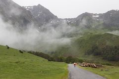 Tour de Francerutt i Pyreneesna, Frankrike royaltyfria foton