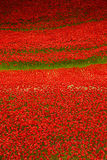 Tour de l'affichage WW1 de pavot de Londres Photos stock
