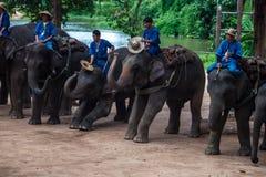 Tour de Mahouts sur des éléphants Photographie stock