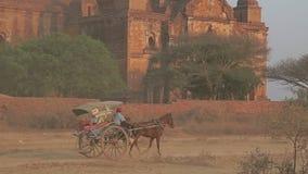 Tour de prise de touristes de chariot, Bagan banque de vidéos