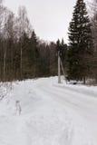 Tour de route de campagne dans la forêt neigeuse d'hiver Photographie stock libre de droits