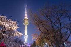 Tour de Séoul dans la ville de Séoul à la vue de nuit au printemps avec la cerise bl Photo stock