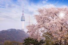 Tour de Séoul, ville au printemps avec l'arbre de fleurs de cerisier entièrement… Photo stock
