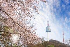Tour de Séoul, ville au printemps avec l'arbre de fleurs de cerisier entièrement… Photo libre de droits