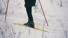 Tour de skieurs dans la forêt d'hiver clips vidéos