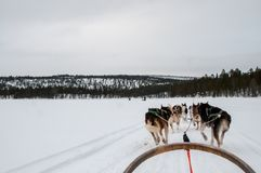 Tour de Sleigh sur le lac congelé photo stock