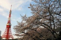 Tour de Tokyo avec des fleurs de cerisier Images libres de droits