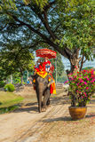 Tour de touristes sur un éléphant Photos stock