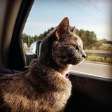 Tour de voiture de Kitty photos stock