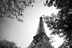 Tour eiffel in black white. Tour eiffel, Paris, France with clear blue sky in tha background, green grass in front Stock Image