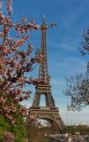 Tour Eiffel iconique à Paris une journée de printemps ensoleillée derrière des fleurs de cerisier Photos libres de droits