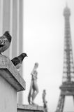 Tour Eiffel and the pigeons Stock Images