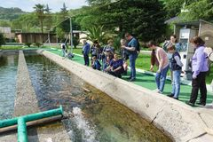 Tour group of tourists feeding fish in an artificial pond trout farm. Demonstration of various in color species rainbow trout. Adler, Sochi, Russia - may 04 stock photos