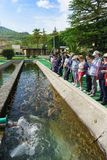 A Tour group of tourists stands near an artificial pond trout farm. Demonstration of various in color species rainbow trout. Adler, Sochi, Russia - may 04, 2019 royalty free stock image