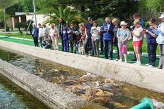 A Tour group of tourists takes pictures of feeding fish in an artificial trout pond. Demonstration of various in color species. Adler, Sochi, Russia - may 04 stock photography