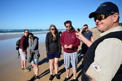 Tour guide on Fraser Island Australia holding a pipi shellfish royalty free stock photos