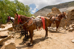 Tour horses waiting for customers Stock Photo