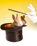 Tour magique de lapin dans le premier chapeau Images libres de droits