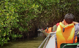 Tour of the mangroves Royalty Free Stock Image