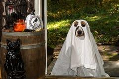 Tour ou traitement mignon de chien Images stock