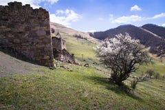 Tour résidentielle du village avec une histoire mille an de la république Igushetii, Russie Photos stock