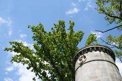 Tour sur le fond des arbres et du ciel images stock