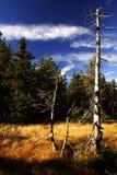 Tourbe-marais en montagnes géantes Image libre de droits
