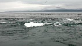 Tourbillon de l'eau de l'océan pacifique sur des paysages étonnants Alaska de fond banque de vidéos