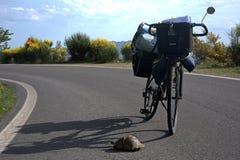 Touring bicycle turtle Royalty Free Stock Image
