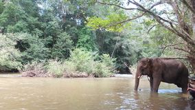 touris的柬埔寨非常蒙多基里省兴趣 库存图片