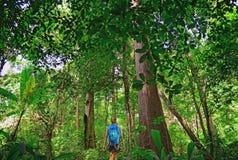 Touris que caminha na selva profunda do parque nacional de Khao Yai em Tailândia imagem de stock