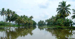 Tourism in India, lush vegetation in Kerala Stock Image