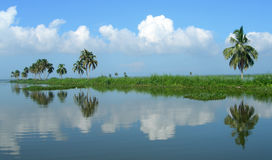 Tourism in India, lush vegetation in Kerala Stock Images